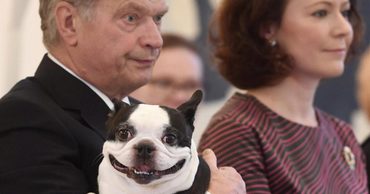Presidentti koira yle