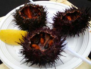 lyon ja liha merisiili